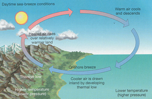 Printables Sea Breeze Diagram day 6 lake erie weather drakes well httpwww uwlax edufacultystoeltingintro guidesimagesland sea breeze 300 jpg this diagram shows how a breeze